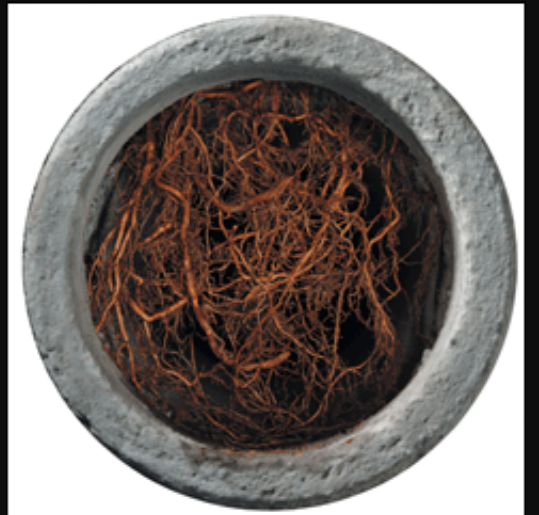 Roots clogged in pipe