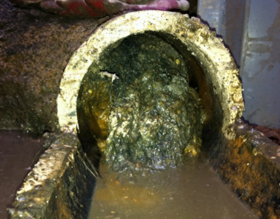 plugged septic pipe
